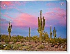 Southwest Desert Spring Acrylic Print