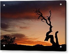 Southwest Tree Sunset Acrylic Print
