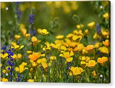 Southwest Wildflowers  Acrylic Print by Saija  Lehtonen