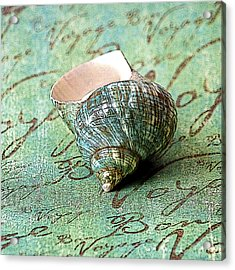 Souvenir Shell Acrylic Print by Karen Stephenson