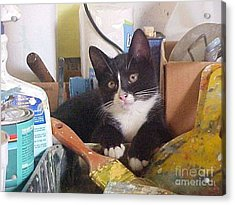 Sox The Kitty Artist Acrylic Print by Robert Stagemyer