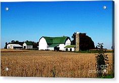 Soybean Farm Acrylic Print by Tina M Wenger