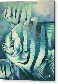 Spadefish Acrylic Print