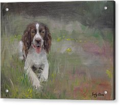 Spaniel At Rest Acrylic Print