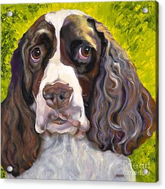 Spaniel The Eyes Have It Acrylic Print