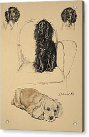 Spaniels, 1930, Illustrations Acrylic Print by Cecil Charles Windsor Aldin