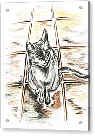 Spanish Cat Waiting Acrylic Print by Teresa White