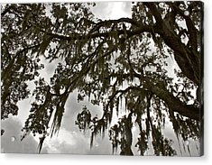 Acrylic Print featuring the photograph Spanish Moss by Alice Mainville