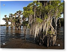 Spanish Moss Acrylic Print by Andy Crawford