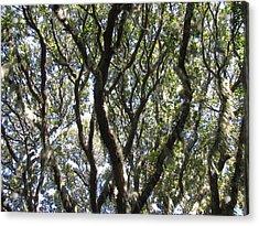 Spanish Moss Oak Acrylic Print