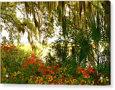 Spanish Moss Of Beaufort 1 Acrylic Print