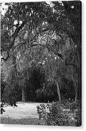Spanish Moss Of St.augustine Acrylic Print by Brigitte Emme