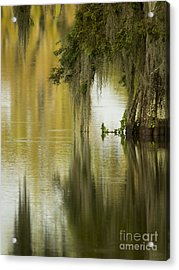 Spanish Moss Reflections Acrylic Print by Kelly Morvant