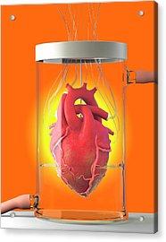 Spare Heart Acrylic Print by Tim Vernon