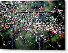 Sparkle Acrylic Print by Beverly Hammond