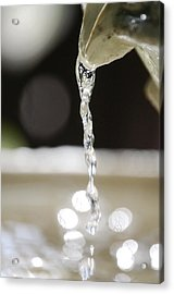 Acrylic Print featuring the photograph Sparkle by Leticia Latocki