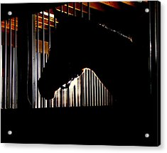 Sparkle Walked In To A Bar.... Acrylic Print by Phil Cheevers
