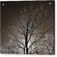 Sparkling Branches Acrylic Print by Kathi Mirto