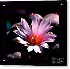 Sparkling Peyote Flower Acrylic Print by Susanne Still