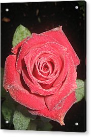 Sparkling Red Rose Acrylic Print by Celeste Tyree