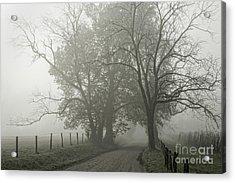 Sparks Lane Fog Acrylic Print