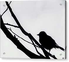 Acrylic Print featuring the drawing Sparrow In A Gray Sky by D Hackett