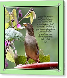 Sparrow Inspiration From The Book Of Luke Acrylic Print