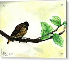 Sparrow On A Branch Acrylic Print by Francine Heykoop