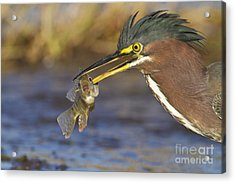 Acrylic Print featuring the photograph Speared by Bryan Keil