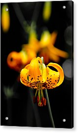 Speckled Acrylic Print