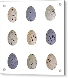 Speckled Egg Tic-tac-toe Acrylic Print by Jane Rix