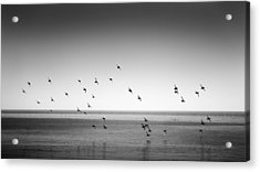 Spectacle Of Flight Acrylic Print