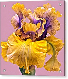 Spectacular Iris Close Up Acrylic Print