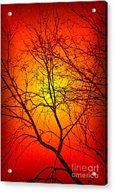 Spectral Sunrise Acrylic Print