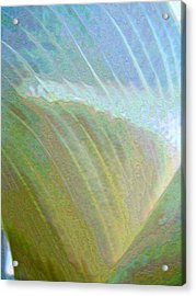 Spectrum Calla Lily  Acrylic Print