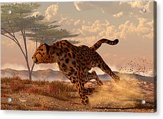 Speeding Cheetah Acrylic Print by Daniel Eskridge