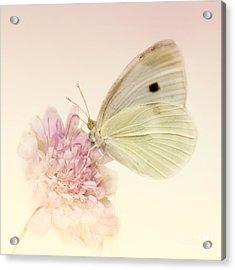 Spellbinder Acrylic Print