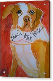 Acrylic Print featuring the painting Spencer The Pit Bull by Gertrude Palmer