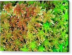 Sphagnum Moss Abstract Acrylic Print