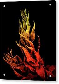 Sphagnum Moss Acrylic Print by Louise Hughes