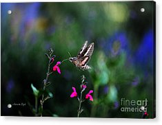 Sphinx Moth And Summer Flowers Acrylic Print
