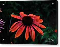 Acrylic Print featuring the photograph Spicy by Judy Wolinsky