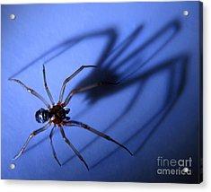 Spider Blue Acrylic Print by Jennie Breeze
