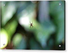 Spider Bokeh Acrylic Print