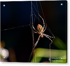 Spider Acrylic Print by Christopher Holmes