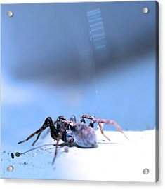 Spider In Blue Tone Acrylic Print by Tommytechno Sweden