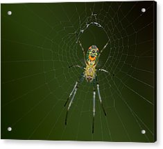 Spider In Mexico Acrylic Print by Brian Magnier