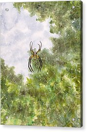 Spider In Web #2 Acrylic Print