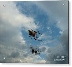 Acrylic Print featuring the photograph Spider by Jane Ford