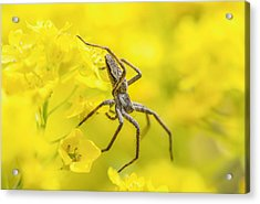 Acrylic Print featuring the photograph Spider by Jaroslaw Grudzinski